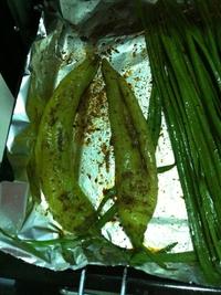 烤蔬菜_烤箱版的做法步骤3