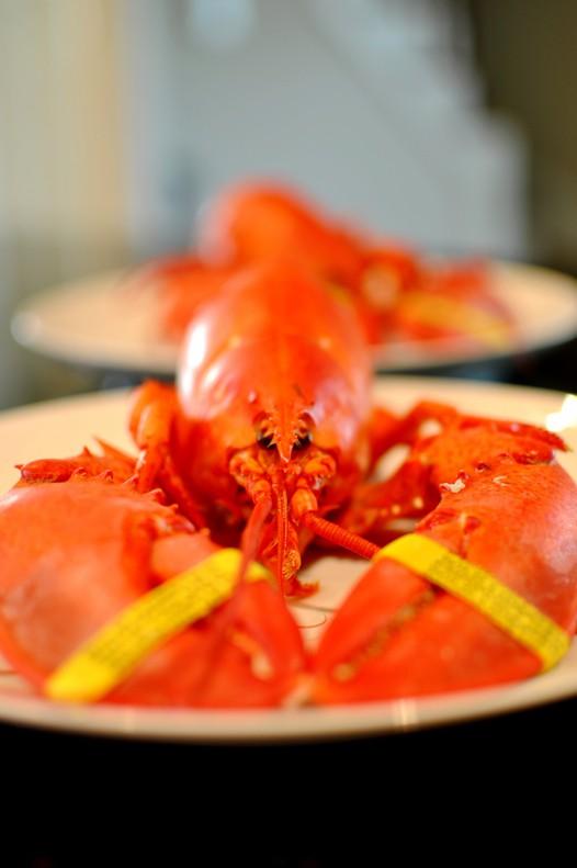 清蒸波士顿龙虾的做法 怎么做清蒸波士顿龙虾