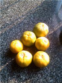桔子白果糖水的做法步骤1