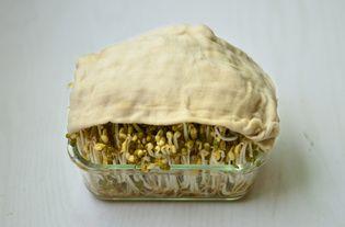 自制绿豆芽的做法步骤:4
