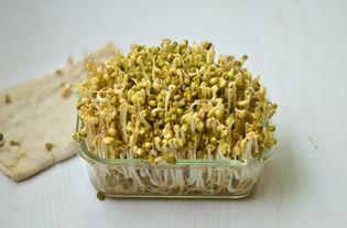 自制绿豆芽的做法步骤:5