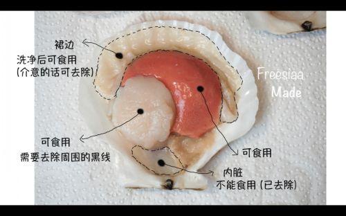蒜蓉粉丝蒸扇贝的做法图解4