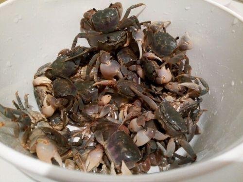 超级简单腌螃蟹的做法图解1