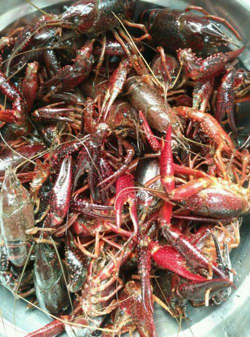 2. 把所有的小龙虾都清理干净,倒在盆里再冲洗两遍,捞出沥干水分