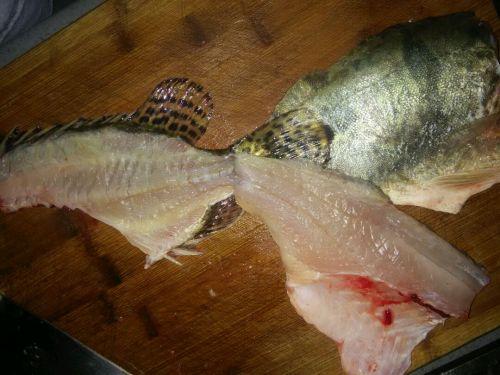 松鼠桂鱼的做法图解2