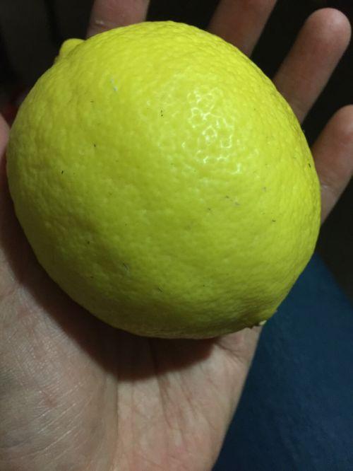 纯手工川贝柠檬膏的做法图解1