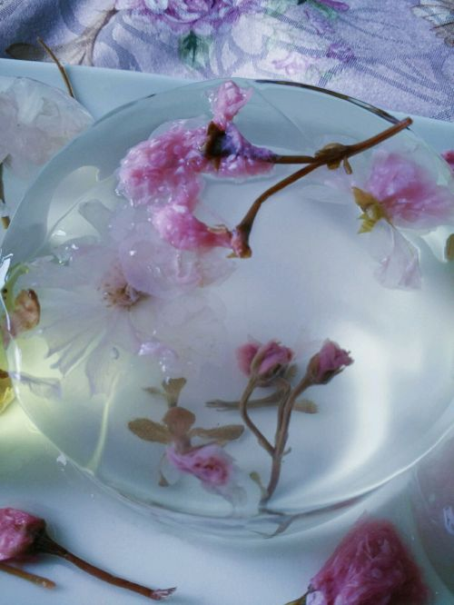 去盐味,桂花,玫瑰花温水泡开   4. 将白凉粉溶液倒入模具八分满,放
