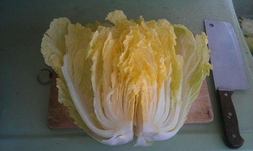 自制韩国泡菜的做法图解3