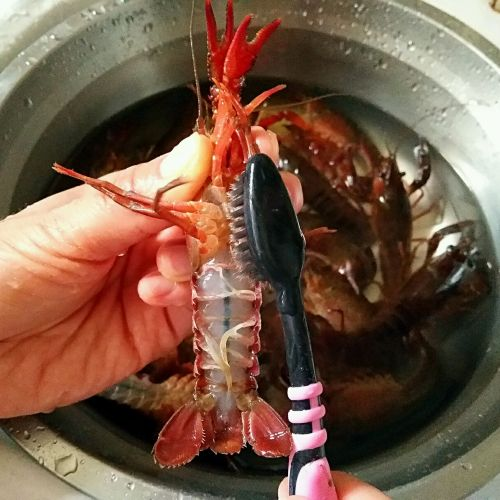 麻辣小龙虾的做法图解2