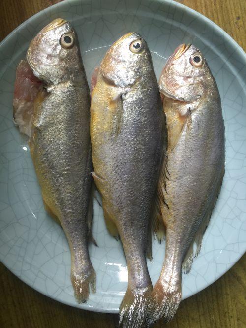 红烧小黄鱼的做法图解1