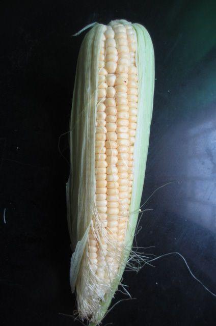 玉米排骨汤的做法图解2