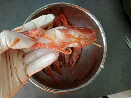 咖喱阿根廷红虾的做法图解2