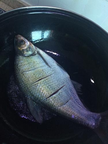 红烧鳊鱼的做法图解3