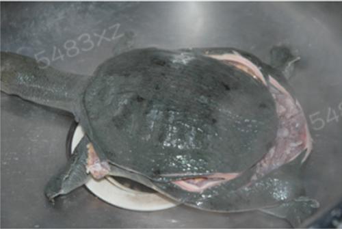 红烧甲鱼的做法图解7