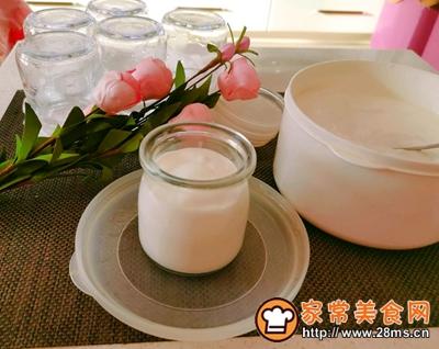 自制原味酸奶的做法图解13