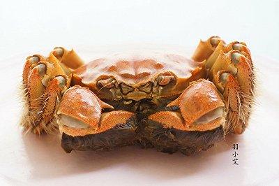 六月黄-大闸蟹