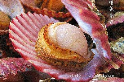 吃不够的小海鲜清蒸扇贝