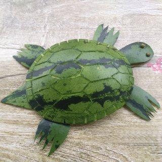 西瓜皮小乌龟